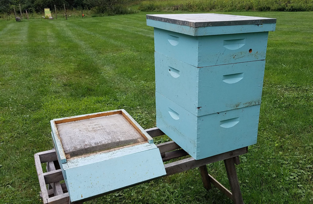 10 frame hive boxes and screened bottom board