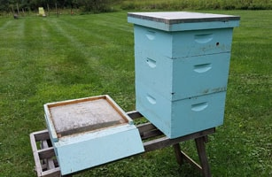 Your cost to start beekeeping includes the purchase of hive components.