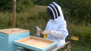 Bee jacket and gloves