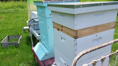 What's In A Beginner Beekeeping Kit?A Major Change We'd Make If We Had To Do It Over