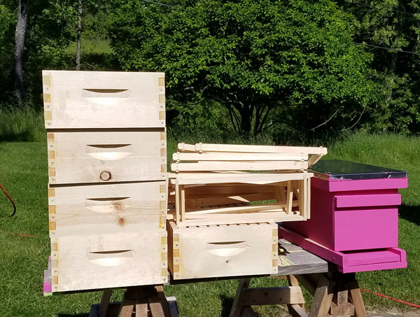 Beekeeping On A Budget(Money Saving Tips)