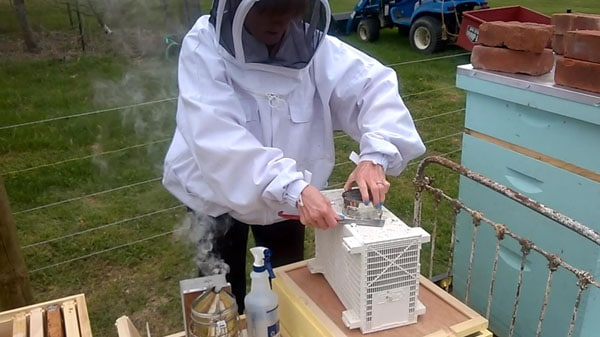 How & When To Start Beekeeping (8 Action Steps)