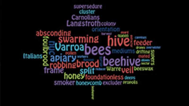 Beekeeping terms word cloud