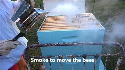 How to inspect a beehive by smoking the bees