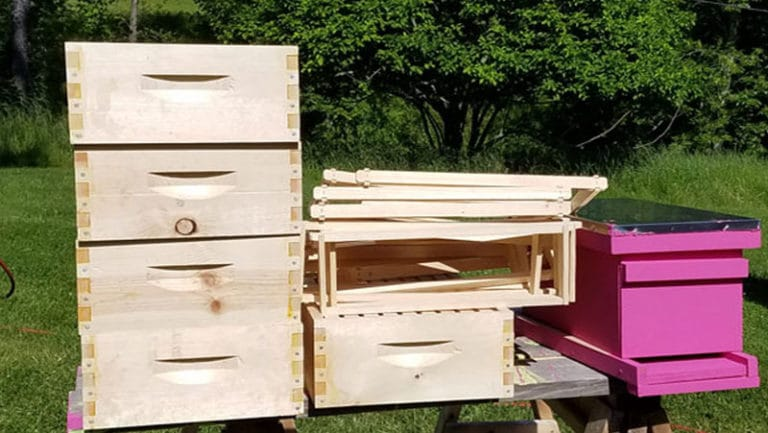 3 Main Beehive Types (Which To Choose)