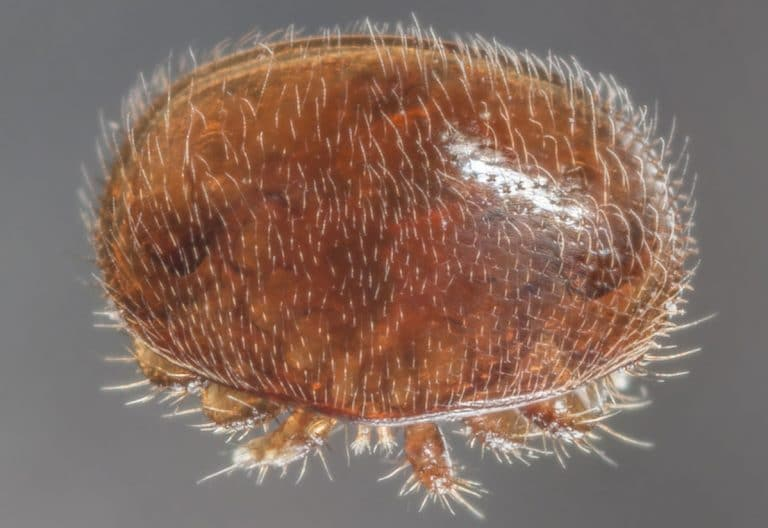 Varroa Mites: A Complete Treatment Guide