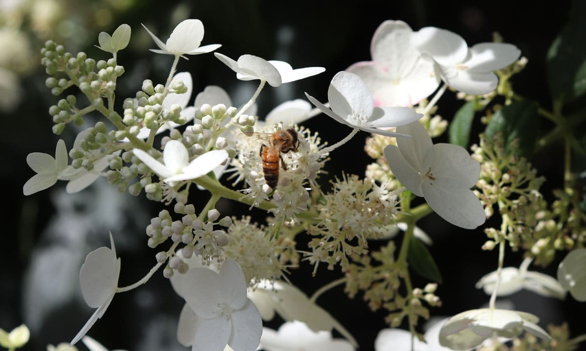 Honey bee foraging