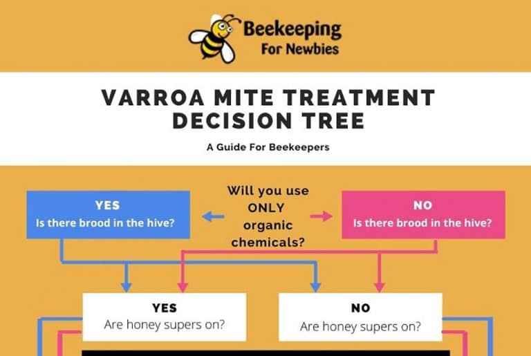 Best Varroa Mite Treatment (How To Choose)