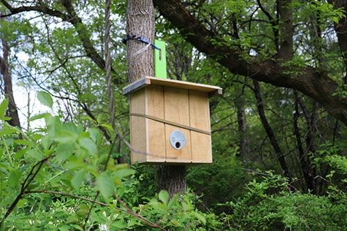 Image of swarm trap