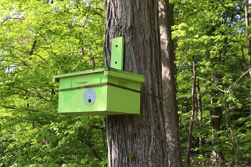 Hive box swarm trap image