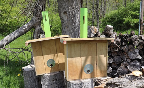 Image of 2 swarm traps built with T 111 plywood