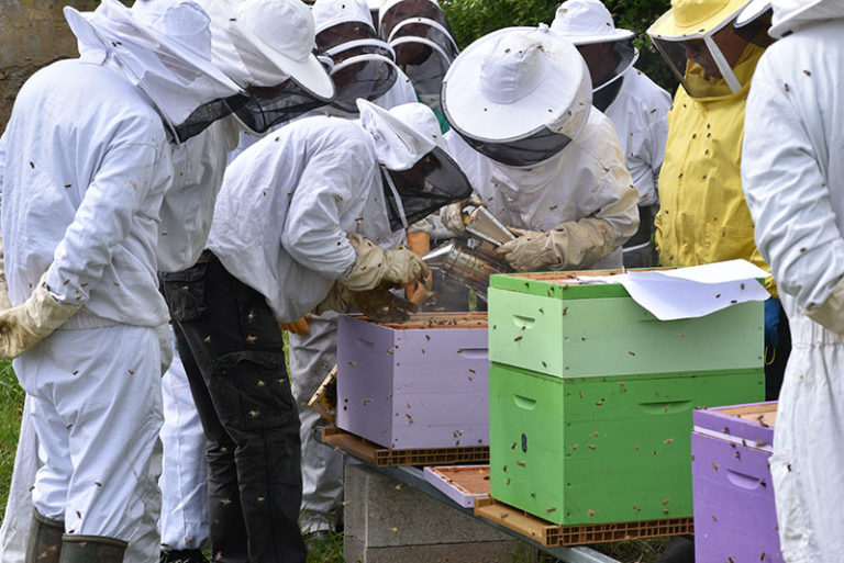 Beekeeping Education For Beginners (Learn The Basics)