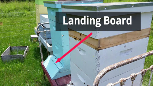 Hive stand landing board image