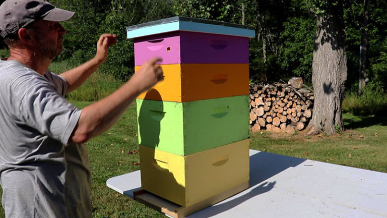 How To Set Up Your Beehive (It's Easy!)