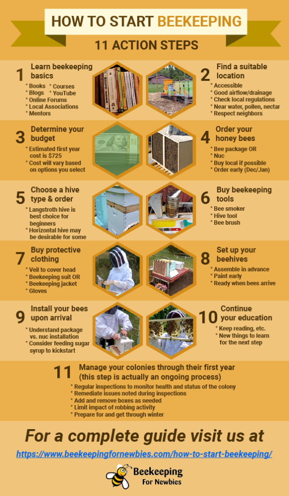 How To Start Beekeeping (11 Action Steps) Infographic