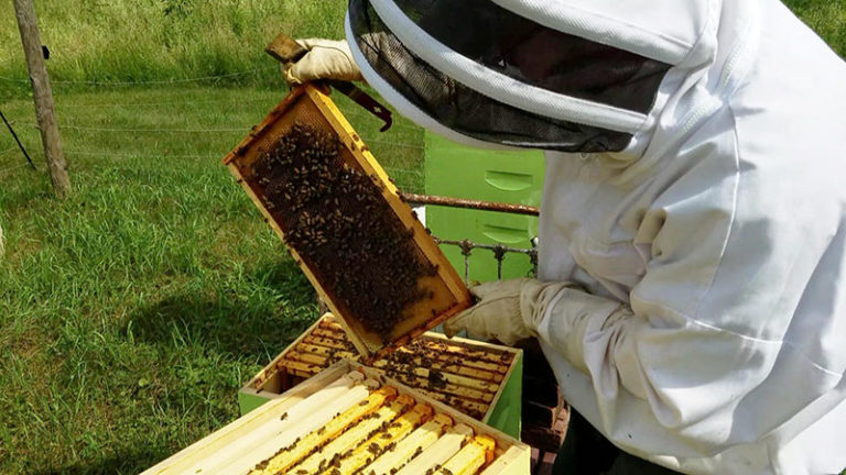 Managing Beehives (A Beginner's Guide)