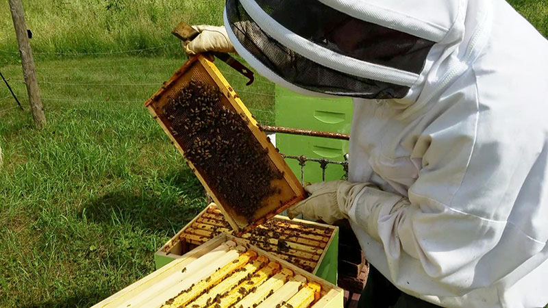 Managing beehives