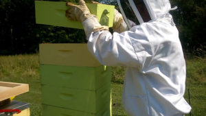 Managing beehives in summer by adding a honey super