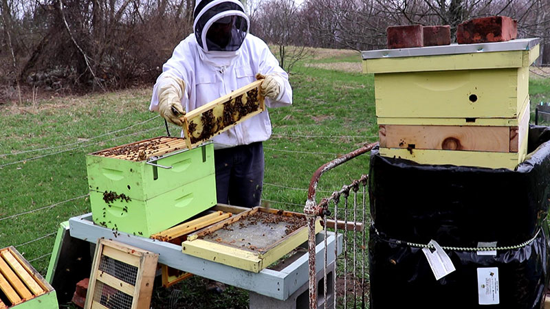 Spring beehive management. Early inspection.