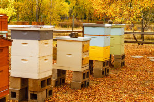 Fall hive management (hives in the fall)