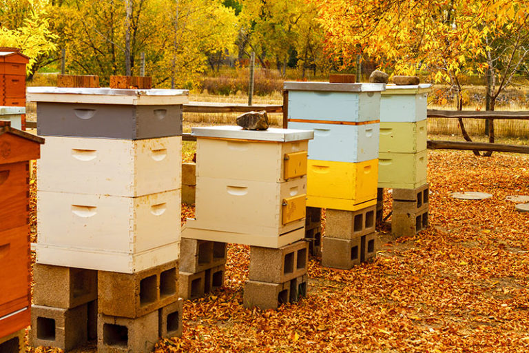 Fall Hive Management (Get Ready For Winter!)